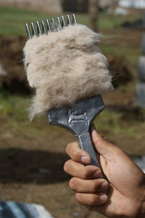 Cashmere World: Fiber quality aided by genetic research in